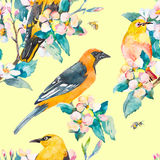 Reticolo della sorgente Filiale di fioritura Modello dell'acquerello dell'uccello dell'Bianco-occhio e di Oriole Api, vespa water Immagine Stock