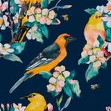 Reticolo della sorgente Filiale di fioritura Modello dell'acquerello dell'uccello dell'Bianco-occhio e di Oriole Api, vespa water Immagini Stock Libere da Diritti