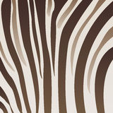 Reticolo della zebra Immagine Stock