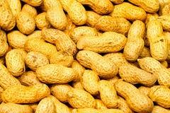 Reticolo delle arachidi Fotografia Stock Libera da Diritti
