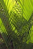 Reticolo delle foglie di palma intrecciate fotografia stock libera da diritti