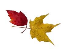 Reticolo di autunno Immagini Stock