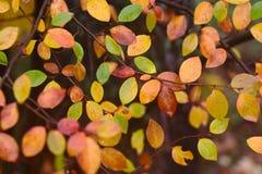 Reticolo di autunno con i fogli rossi, verdi e di colore giallo Fotografia Stock