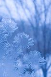 Reticolo di gelo su un vetro di finestra Fotografia Stock