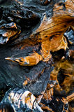 Reticolo di legno Fotografia Stock Libera da Diritti
