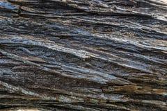 reticolo di legno della priorità bassa di struttura Immagini Stock