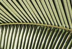 Reticolo di una foglia di palma immagini stock