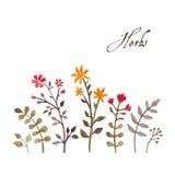 Reticolo floreale Illustrazione Vettoriale