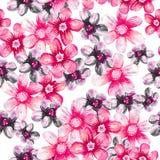 Reticolo floreale senza giunte Fotografia Stock Libera da Diritti