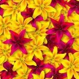 Reticolo floreale senza giunte Disposizione caotica dei fiori Fiore rosso e giallo del giglio su fondo giallo immagini stock libere da diritti