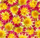 Reticolo floreale senza giunte Disposizione caotica dei fiori Rosso e immagini stock