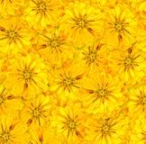 Reticolo floreale senza giunte Disposizione caotica dei fiori yellow fotografia stock