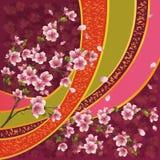Reticolo giapponese con il fiore di sakura Immagini Stock