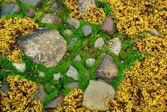 Reticolo naturale di colore Fotografia Stock Libera da Diritti