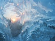 Reticolo naturale gelido #3 Immagine Stock Libera da Diritti