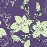 Reticolo senza cuciture con i fiori della magnolia del disegno Fotografia Stock Libera da Diritti