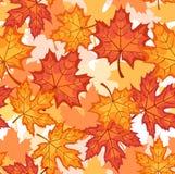Reticolo senza cuciture con le foglie di acero di autunno. Immagine Stock Libera da Diritti