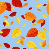 Reticolo senza cuciture con le foglie di autunno colorate. Fotografie Stock