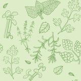 Reticolo senza cuciture delle erbe disegnate a mano Fotografia Stock