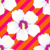 Reticolo senza giunte Cherry Blossom Reticolo con i fiori rosa Ornamento con i motivi orientali Vettore illustrazione vettoriale