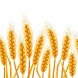 Reticolo senza giunte con frumento Orecchie dorate naturali di immagine agricola di orzo o di segale royalty illustrazione gratis