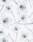 Reticolo senza giunte con i fiori disegnati a mano Fotografia Stock Libera da Diritti