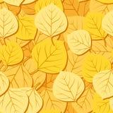 Reticolo senza giunte con i fogli della tremula di autunno. Vettore Fotografie Stock Libere da Diritti