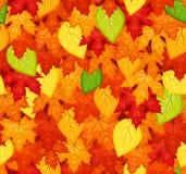 Reticolo senza giunte con i fogli di autunno colorati. Vecto Fotografia Stock