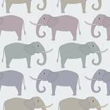 Reticolo senza giunte con l'elefante Immagine Stock