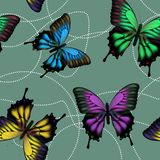 Reticolo senza giunte con le farfalle variopinte Fotografia Stock Libera da Diritti