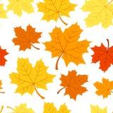 Reticolo senza giunte con le foglie di acero di autunno. Vettore Fotografie Stock Libere da Diritti