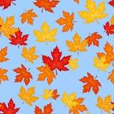 Reticolo senza giunte con le foglie di acero di autunno. Vettore Fotografia Stock Libera da Diritti