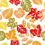 Reticolo senza giunte dei fogli di autunno Immagine Stock