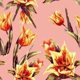 Reticolo senza giunte dei tulipani Fotografia Stock Libera da Diritti
