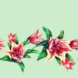 Reticolo senza giunte dei tulipani Fotografie Stock Libere da Diritti