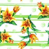 Reticolo senza giunte dei tulipani Fotografie Stock