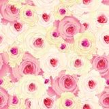 Reticolo senza giunte delle rose Fotografie Stock Libere da Diritti