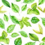 Reticolo senza giunte floreale Rami e foglie della primavera Acquerello di vettore Fotografia Stock Libera da Diritti