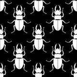 Reticolo senza giunte Fondo dell'insetto Ornamento dello scarabeo Immagine Stock Libera da Diritti