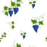 Reticolo senza giunte Immagine grafica stilizzata di una vite con l'uva Royalty Illustrazione gratis