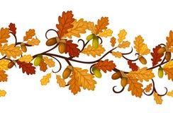 Reticolo senza giunte orizzontale con i fogli della quercia di autunno Fotografia Stock