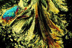 Reticolo tramite il microscopio Fotografia Stock Libera da Diritti