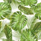 Reticolo tropicale dei fogli Fotografie Stock