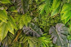 Reticolo tropicale dei fogli Piante esotiche della foglia verde senza cuciture su un fondo scuro della giungla Collage artistico  immagine stock libera da diritti