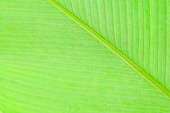 Reticolo verde del foglio Fotografia Stock