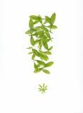 Reticolo verde del foglio fotografie stock libere da diritti