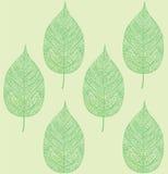 Reticolo verde del foglio Fotografie Stock