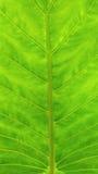 Reticolo verde del foglio Fotografia Stock Libera da Diritti