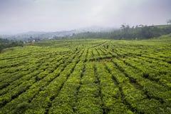 Reticolo verde del giardino del foglio (mare Fotografia Stock