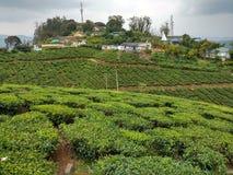 Reticolo verde del giardino del foglio (mare Fotografia Stock Libera da Diritti